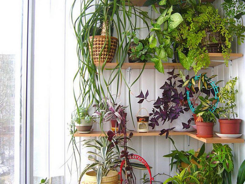 Идеи для цветов в квартире своими руками 40