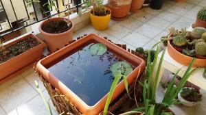 maxresdefault-2-300x168 Водоем в квартире, и какие растения для него нужны