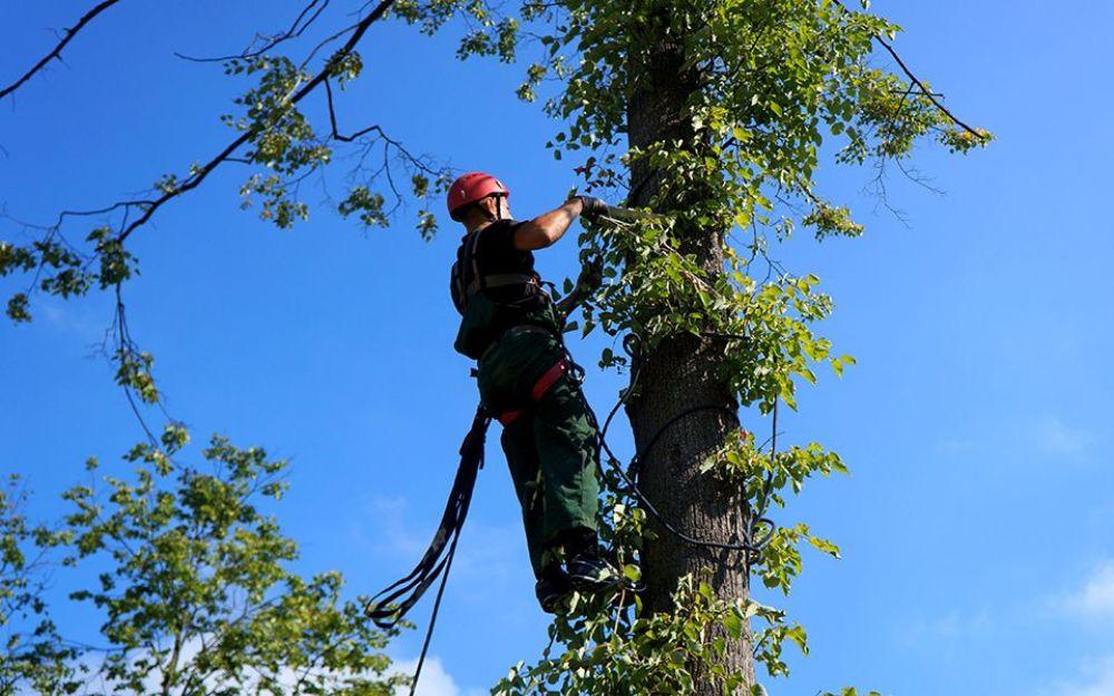 adb-1 Посадка и удаление деревьев
