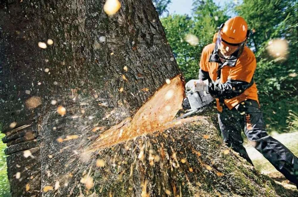 Посадка и удаление деревьев