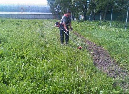 chem_kosit_travu_na_uchastke Чем косить траву на участке