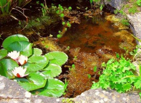ishem_vodu_na_priusadebnom_uchastke_narodnie_primeti Ищем воду на приусадебном участке. Народные приметы