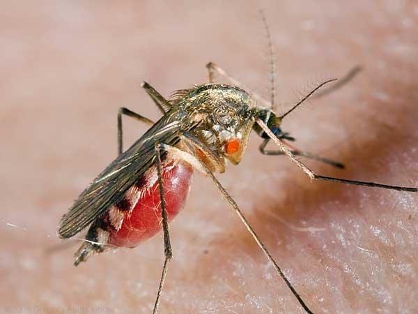 moskito_killer_zashita_ot_komarov_bolshih_territorij Москито Киллер — защита от комаров больших территорий.