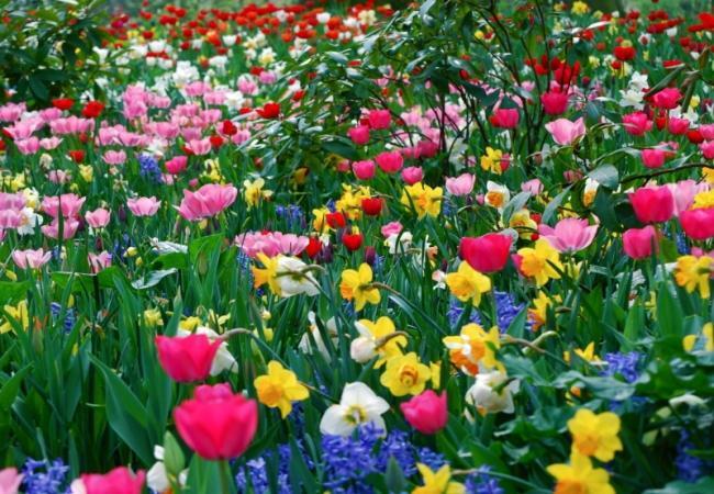 fullsize Праздничная доставка цветов в Херсоне к знаменательной дате